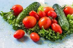 Температурные режимы для распространенных сортов томатов и огурцов