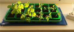 Электроподогреватель для проращивания семян рассады 50х25 см